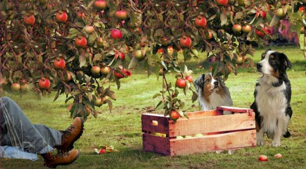 appleseed-gawy3_650x360
