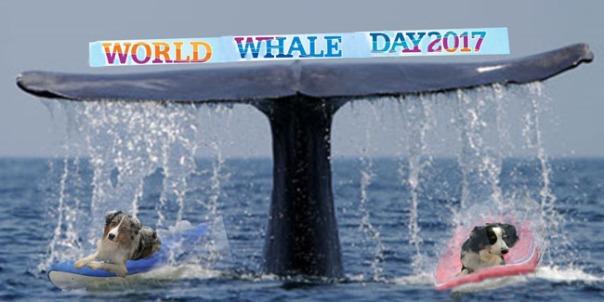 whaleday-gawy_650x320