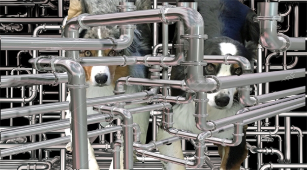 WorldPlumbingDay_650X360