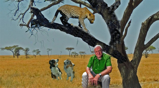 Attenborough.GaWy_650x360