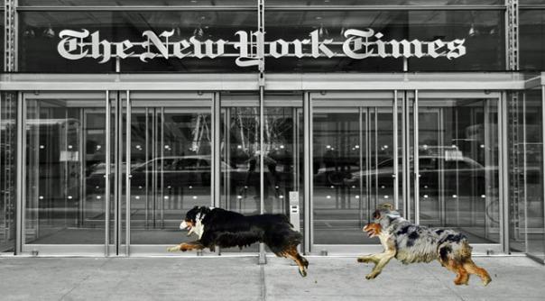 NYT.GaWy_650x360