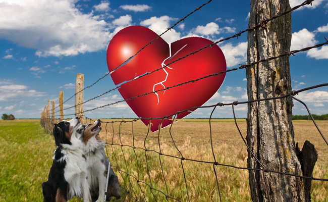 Heart.GaWy2_650x400